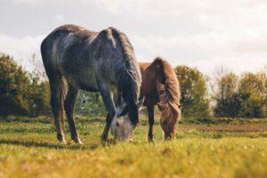 Zwei gesunde Pferde in der Abendsonne